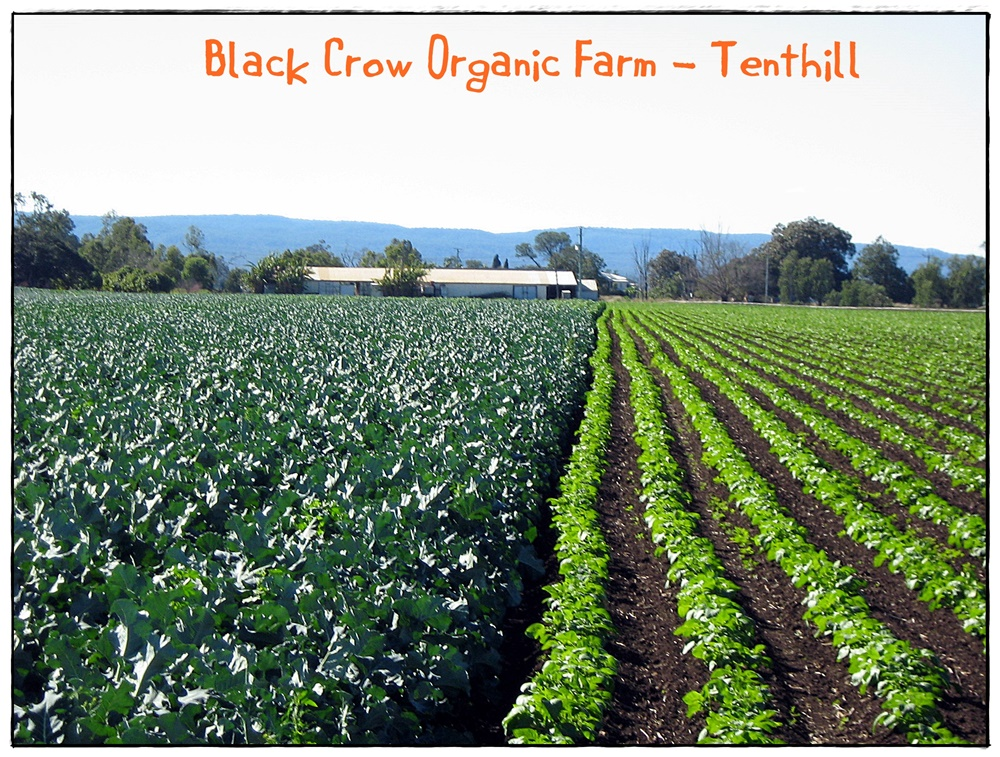 Black Crow Organics 2