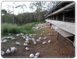 Moya Valley Poultry 1