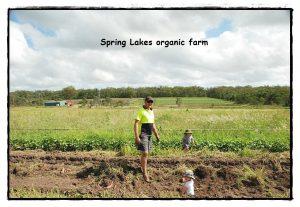SpringLakes Farm6