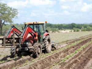 SpringLakesfarm7