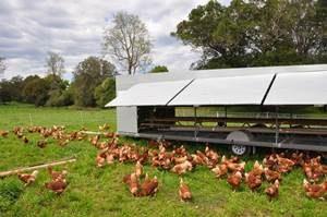 Walker's Fresh Farm Food 1